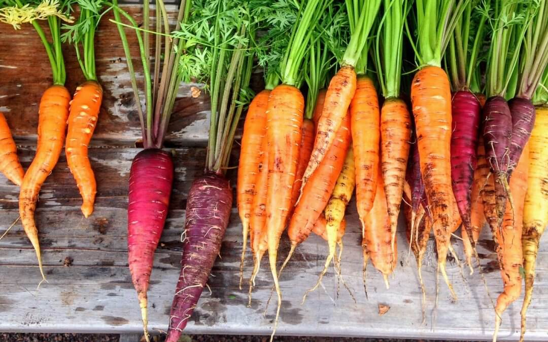 7 reasons to grow your own fruit and veg